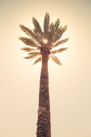 palm tree against sunny sky, retro style photo