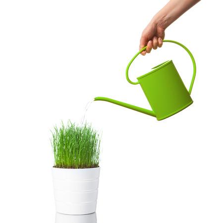 水まき缶で緑の草に水をまく、白で隔離されます。