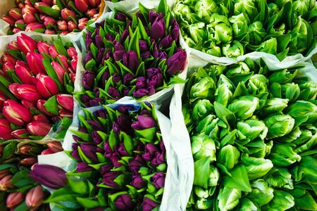 wholesale: tulips at the flowers wholesale market Stock Photo