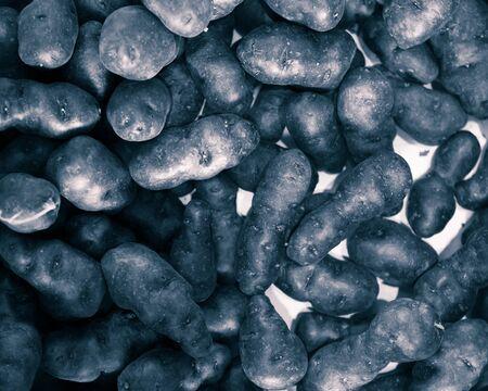 truffle: truffle vitelotte potato, closeup view