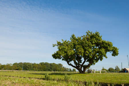 branchy: tree on the field against blue sky background Stock Photo
