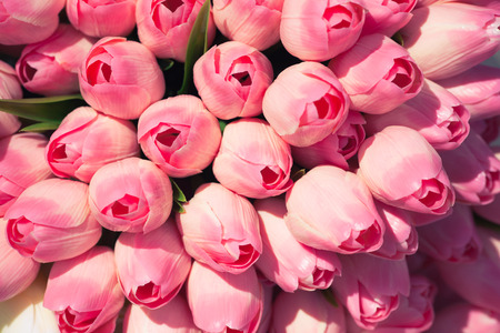 pink flowers: pink tulips background