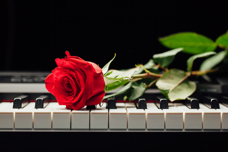 piano keys and red rose Stockfoto