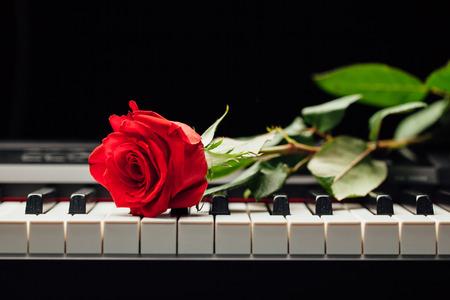 piano keys and red rose Archivio Fotografico