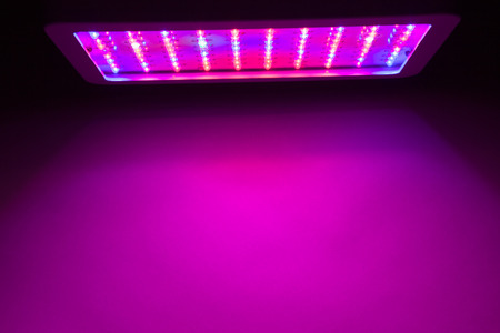 uv: LED grow light copy-space background