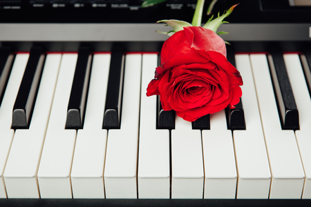 accompaniment: piano keys and red rose Stock Photo