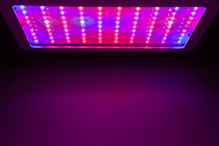 copyspace: LED grow light copy-space background