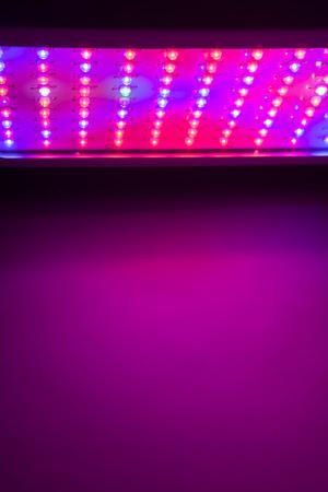 copyspace: LED grow light copy-space background