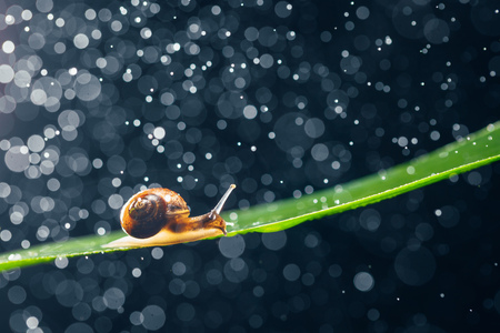 sluggish: snail with water particles bokeh as the background