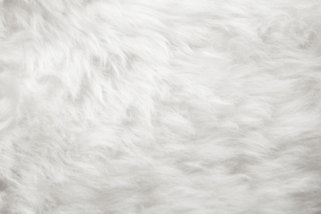 natural white fur background 写真素材