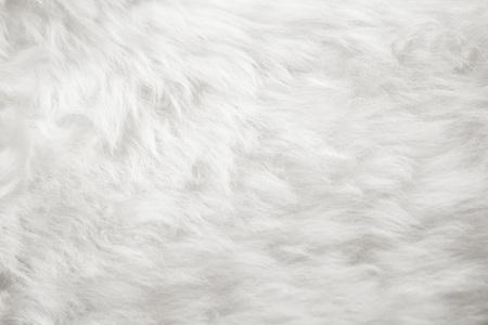 natuurlijke witte vacht