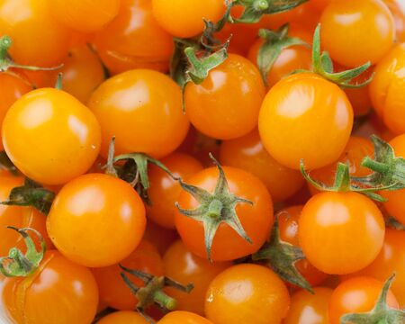 tomate cherry: yellow cherry tomato background, closeup view