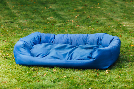 blue green background: blue dog bed, green grass background Stock Photo