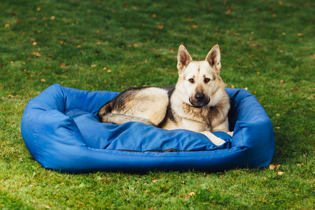 lazybones: dog on his bed, green grass background