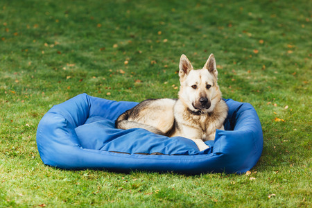 paw smart: dog on his bed, green grass background