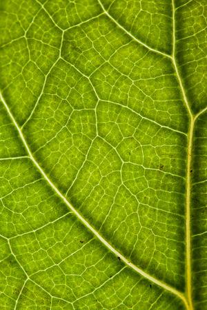 green leaf backdrop Stock Photo
