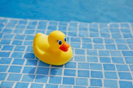 yellow rubber duck in blue swimming pool Foto de archivo