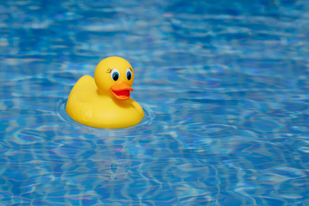 yellow rubber duck in blue swimming pool Stock Photo