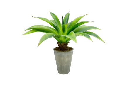 green flower in a pot, isolated on white 스톡 콘텐츠