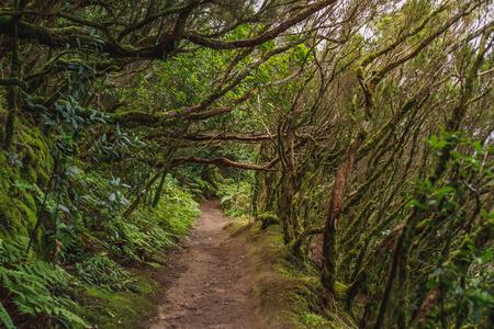 las w wiejskim parku Anaga na Teneryfie Zdjęcie Seryjne