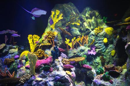 colorful aquarium background with underwater plants