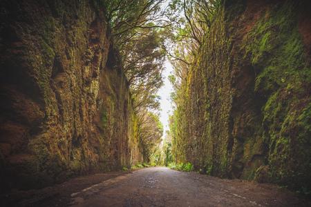 Sentier du Mirador Pico del Ingles dans le parc rural d'Anaga