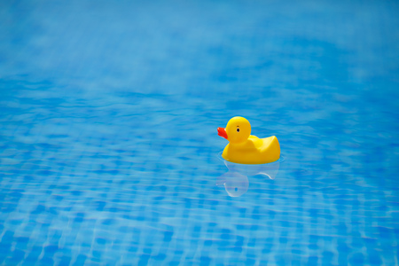 yellow rubber duck in blue swimming pool Фото со стока - 121846111