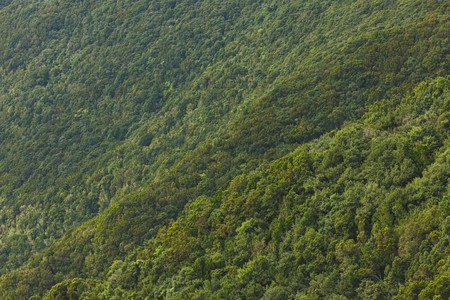 dense green foliage background in Anaga rural park Фото со стока - 121849448