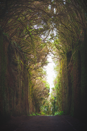 Mirador Pico del Ingles path in Anaga rural park Фото со стока - 121849454