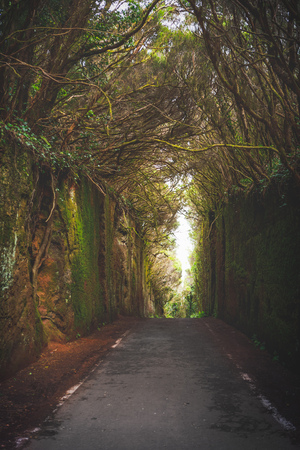 Mirador Pico del Ingles path in Anaga rural park Фото со стока - 123075714