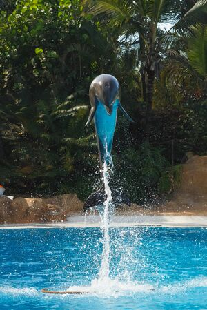 jumping dolphin in blue water Фото со стока
