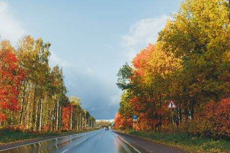 wet highway and autumn trees with colorful foliage