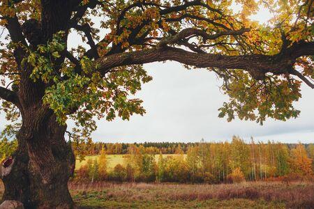 oak tree branch, copy-space background