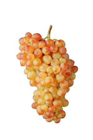 pink and green muscat grapes vine, isolated on white background Banque d'images