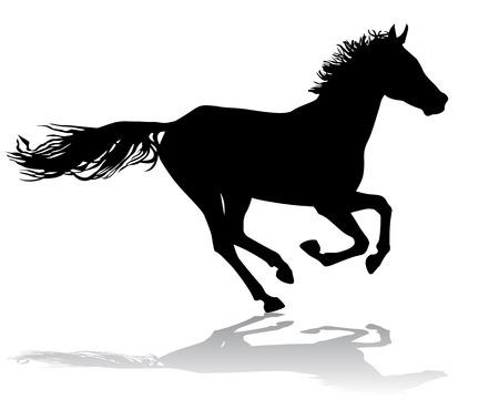 thoroughbred horse: Un caballo galopa r�pido, ilustraci�n vectorial silueta sobre un fondo blanco.