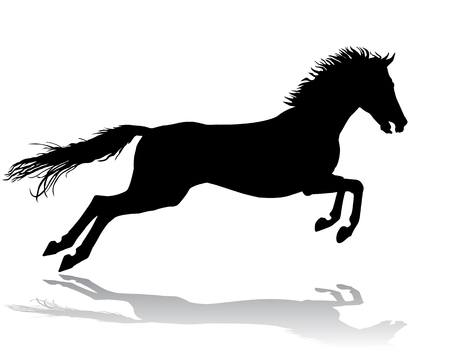 A horse gallops fast, vector illustration silhouette on a white background. Vector