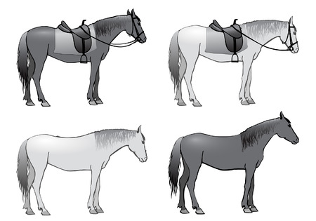bridle: Horse stands under the saddle with stirrups and bridle