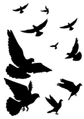 Duiven vliegen. Een kudde van het vliegen. Silhouet op een witte achtergrond.