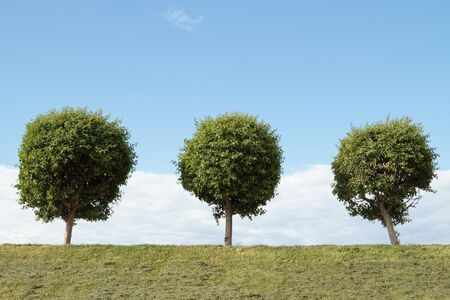 three spherical tree Stock Photo