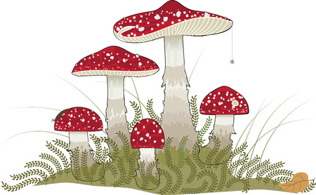 Group of poisonous mushrooms, toadstools Illustration