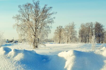 at came: The winter came to forest-steppes of Altai