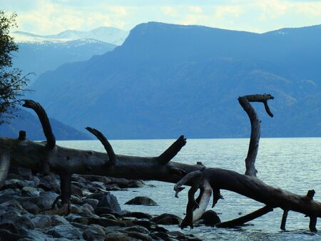 ashore: Dry tree ashore