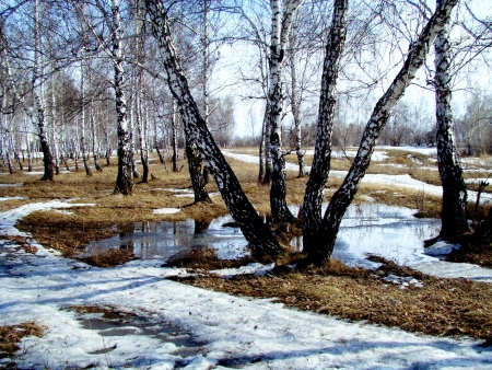 thawed: The first thawed patches appeared in forest-steppes of Altai