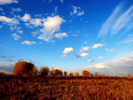at came: The fall came to forest-steppes of Altai Stock Photo