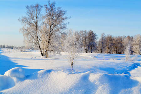 at came: A hardwinter came in forest-steppes of Altai