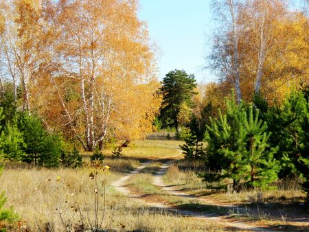 at came: Golden autumn in the forest-steppe of the Altai came