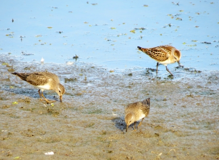 waders:         Waders in the swamp are fed small insects
