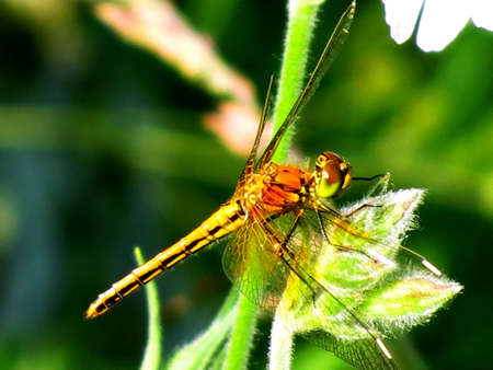 Dragonfly on a sunny day sits on a green plant photo