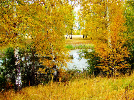 at came: The Zoltoy fall came to forest-steppes of Altai