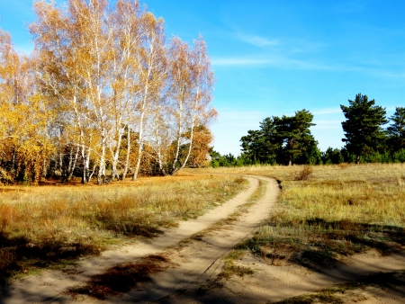 at came: The golden autumn came to forest-steppes of Altai
